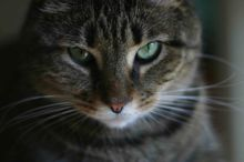 Learn how to move with your cat and prepare your cat for a move.