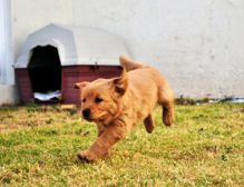 Learn how to move with your dog and prepare your dog for a successful move.